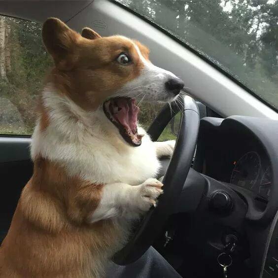 개깜놀 개운전 강아지 놀람 표정 자동차 동물 개놀람
