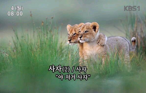 저거 사자 동물 지름 지름신 물건 구입 뽐뿌