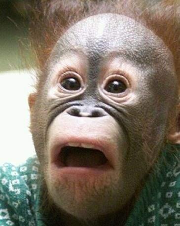 동물 원숭이 놀라는 모습 깜짝 놀람 표정